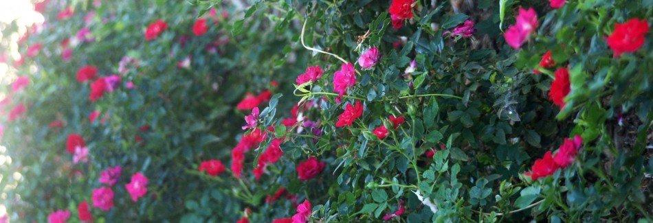 Olney Flowers